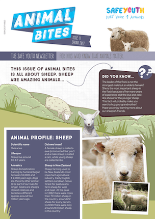 All About Sheep