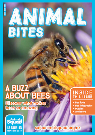A Buzz About Bees