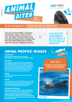 All About Pilot Whales